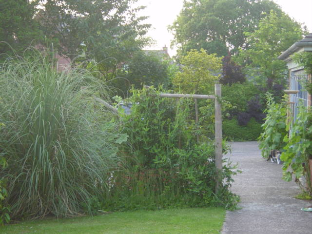 Front path with bamboo fence and pampas grass