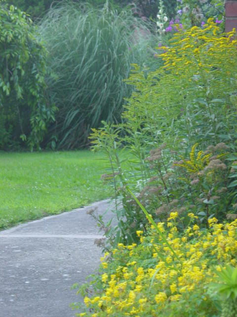Front path with goldenrods