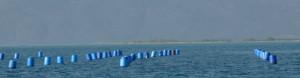 Blue-barrels