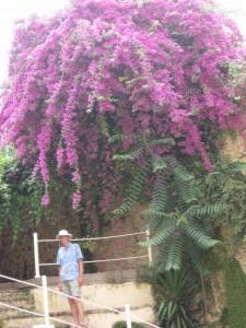 Bill in Corfu