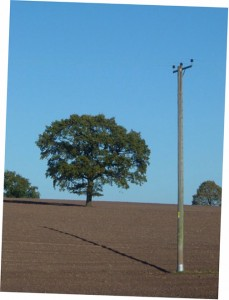 Field, tree and pole