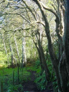 Roger's path, Wrinehill